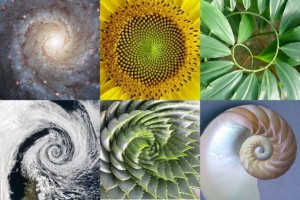 golden-ratio-679x453